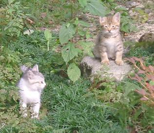 写真:秋のお庭に…うにゃ~~もう1にゃん?誰にゃ~~~?