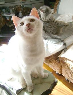 写真:白ゴマ…変にゃお顔… ぶりちゃん、あきれ顔?