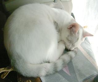 白ゴマ、心配してくれてない…、寝てる…にゃ