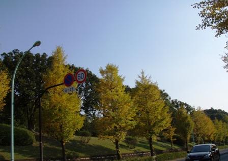 blog_代々木公園の紅葉071109