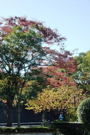 blog_皇居の紅葉151109