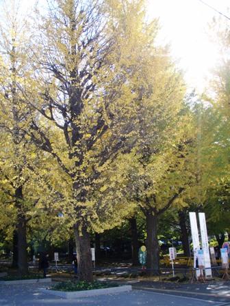 blog_日吉キャンパスの黄葉211109