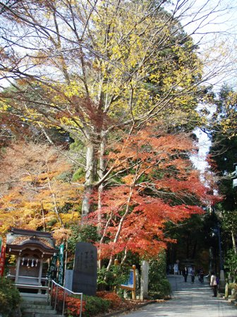 blog_高尾山1号路入り口