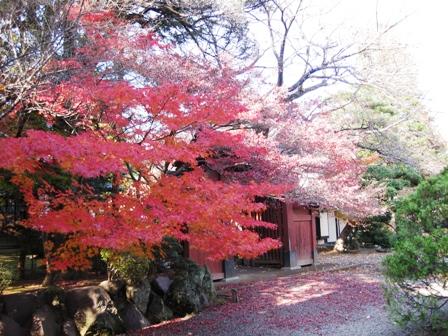 blog_ピンクの門と紅葉281109