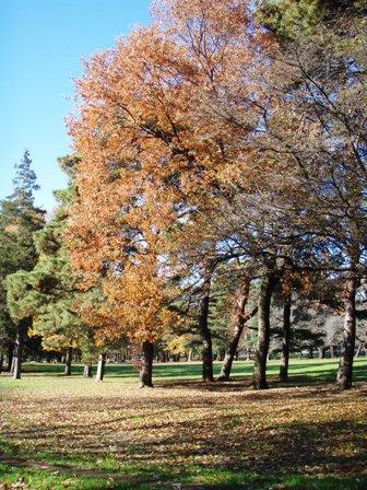 blog_野川公園の森2061209