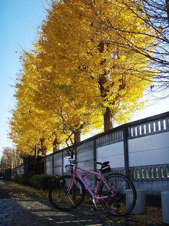 blog_銀杏とR3061209