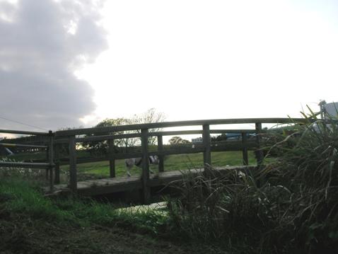 橋だじょな~.