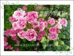 2008 薔薇写真展-1