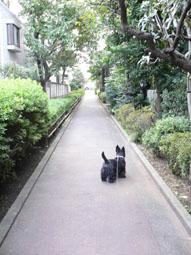 ryokudo.jpg
