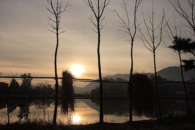 木と田んぼ