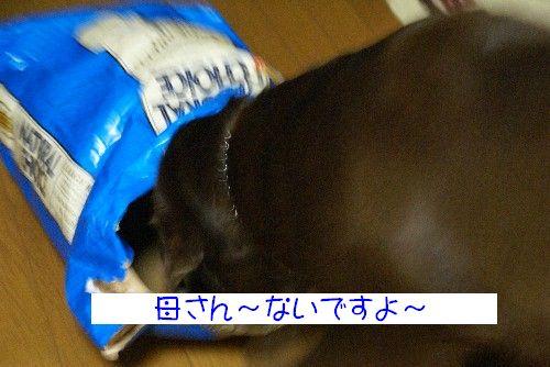 6gatu4.jpg
