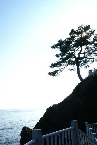 sikoku43.jpg