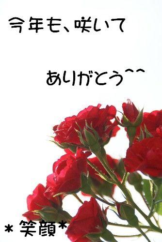 suka-re4.jpg