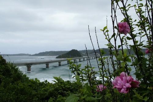 tunoshima4.jpg
