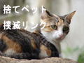 cat120x90.jpg