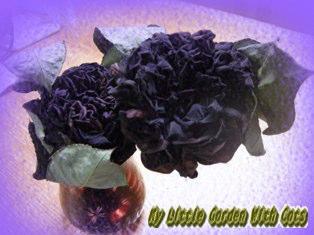 ハンデンベルク 黒バラ