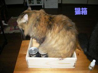 猫箱 らんちゃん