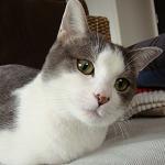 近所の公園にいた子猫がいつの間にか子猫を産んだ。小さいけどしっかり母さん。