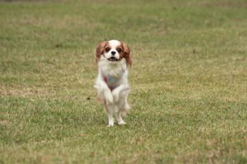 リナちゃん、走る