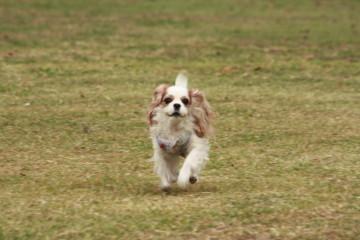 ナナちゃん、走る