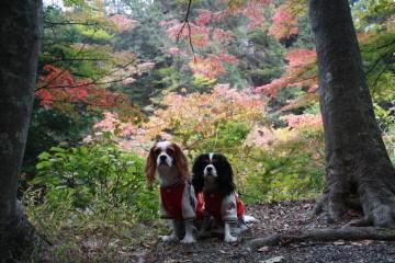 紅葉している木の前で。。。