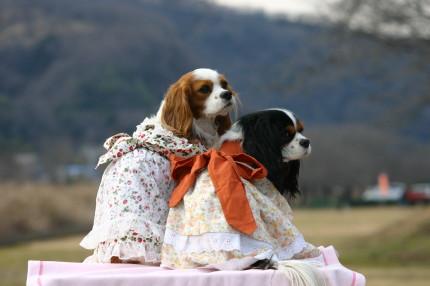 チャコ&エリー、ドレス②
