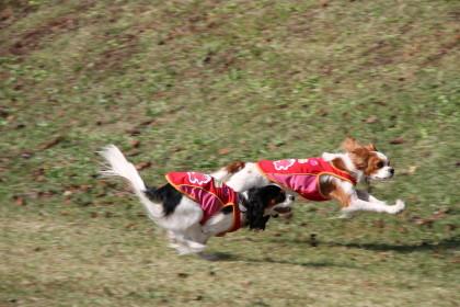 嬉しそうに走るチャコ&エリー