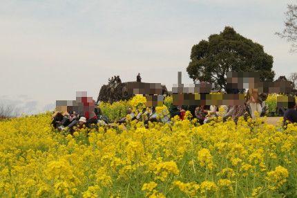 たくさんの人が菜の花を見に来ていました