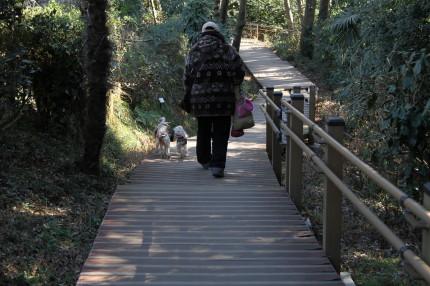 歩道が木で出来ていて足に優しい