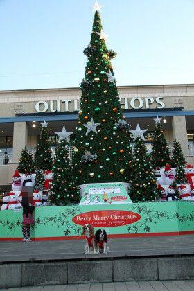 クリスマスツリーの前で。。。①