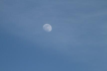 昼間のお月さま