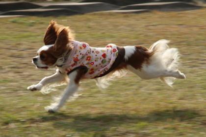 かみんちゃん、楽しそうに走っていました