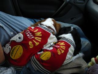 車の中で寝るのは気持ち良いなぁ~