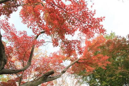 日本庭園⑥