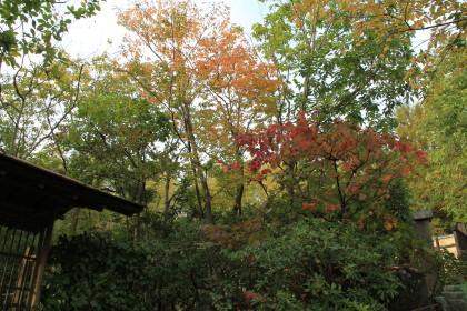 日本庭園⑦