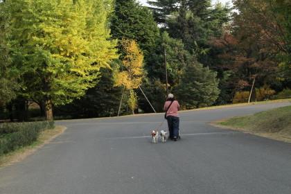 公園を歩くママ、チャコ&エリー