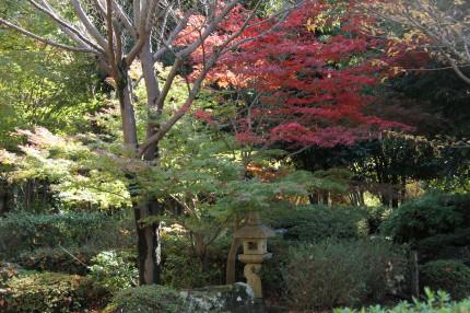 見本庭園の紅葉
