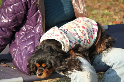 マイロママさんのお膝の上で休憩するモニカちゃん