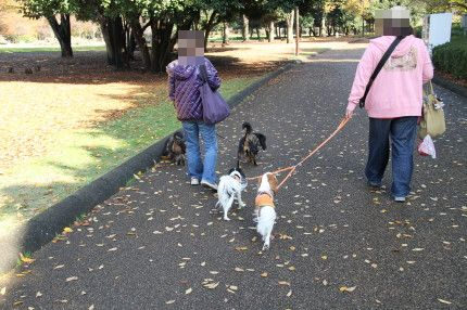 マイロママさんとマリーちゃん&モニカちゃんとお散歩