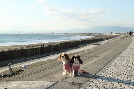富士山とチャコ&エリー