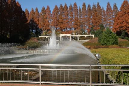 噴水とメタセコイア