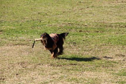 モニカちゃん、走る