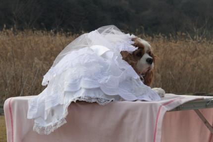 ライフちゃん、ウェディングドレス②