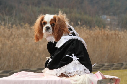 かみんちゃん、ドレス②