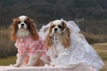 リナちゃん、ナナちゃんドレス&ウェディングドレス