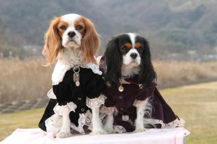 チャコ&エリー、ドレス①