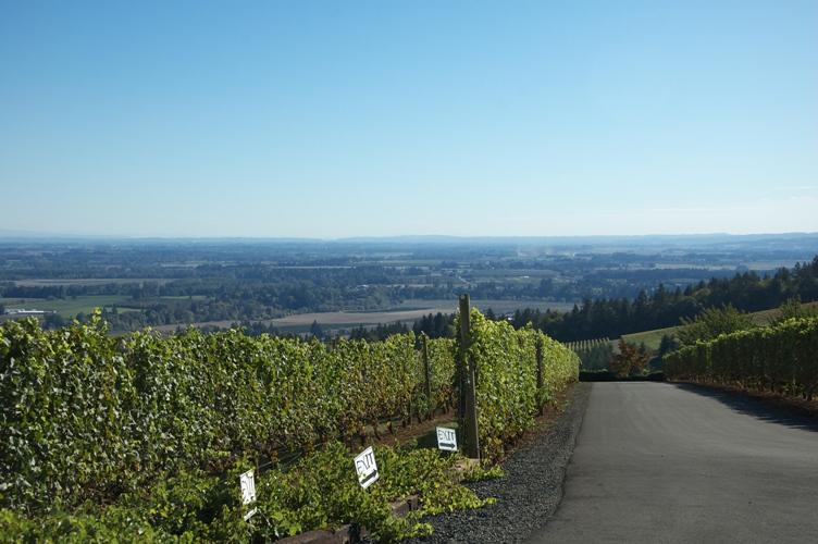 White Rose Winery 3