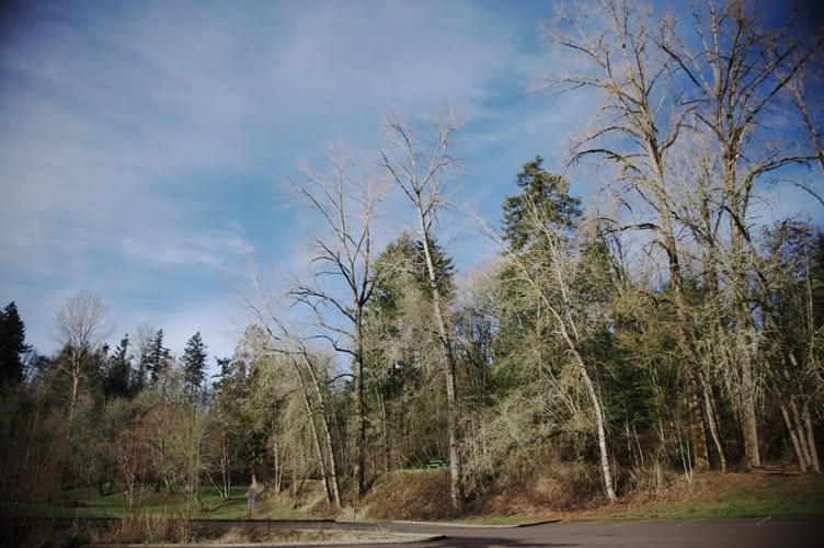 Willamette river1