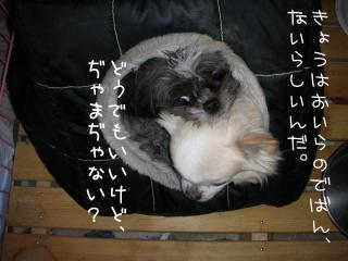 2007.12.5 021-1