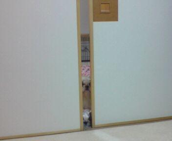 yamon-fusuma1.jpg